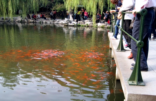 Feeding fish at Flower Harbor