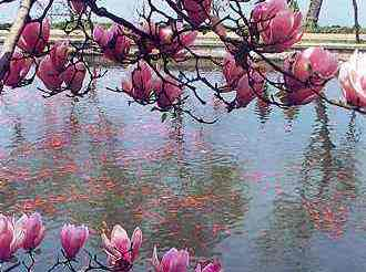 Spring plum blossoms at West Lake, Hangzhou, China